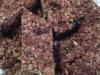 Batoniki owsiane z orzechami